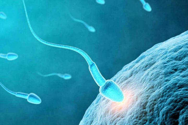 Sperm Sayımı Arttıran 7 Süper Gıda